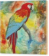 Scarlet Macaw In Abstract Wood Print