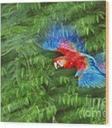 Scarlet Macaw Juvenile In Flight Wood Print
