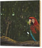 Scarlet Macaw Profile Wood Print
