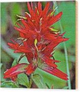 Scarlet Paintbrush On Trail To Swan Lake In Grand Teton National Park-wyoming- Wood Print