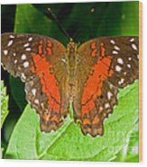 Scarlet Peacock Butterfly Wood Print