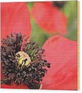 Scarlet Poppy Macro Wood Print