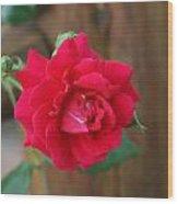Scarlet... Wood Print