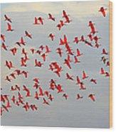 Scarlet Sky Wood Print