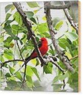 Scarlet Tanager - 11 Wood Print
