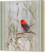 Scarlet Tanager 3630-10-ttp Wood Print