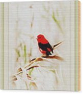 Scarlet Tanager 3630-12 Wood Print