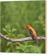 Scarlet Tanager On Snag Wood Print