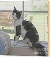 Scarlow Sitting In The Window Wood Print