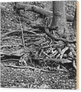 Scary Roots Wood Print