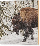 Scary Bison Wood Print