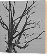 Scary Tree IIi Wood Print