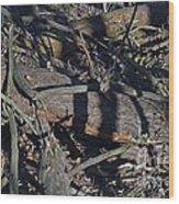 Scat Wood Print