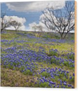 Scattered Bluebonnets Wood Print