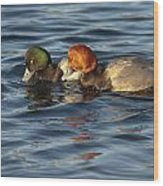 Scaup And Redhead Couple  Wood Print