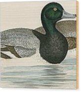 Scaup Duck Wood Print