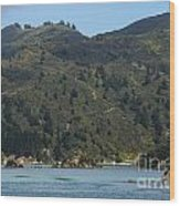 Scenery On Cook Strait Wood Print