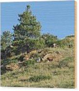 Scenic Hillside Wood Print