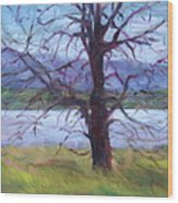 Scenic Landscape Painting Through Tree - Spring Has Sprung - Color Fields - Original Fine Art Wood Print
