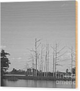 Scenic Swamp Cypress Trees Black And White Wood Print