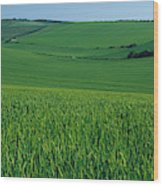 Scenic View Of A Field, South Downs Wood Print