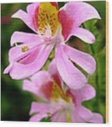 Schizanthus Named Angel Wings Wood Print