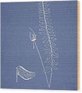 Schizoloma Guerinianum  Wood Print