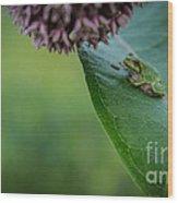 Schlitz Audubon Tree Frog Wood Print