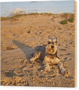 Schnauzer At Dawn Wood Print