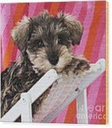 Schnauzer Puppy Looking Over Top Wood Print