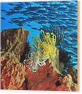 School Of Fishes Wood Print