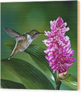 Scintillant Hummingbird Selasphorus Wood Print
