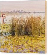 Scirpus In The River Wood Print