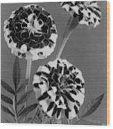 Scotch-stripe Marigolds Wood Print