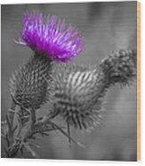Scotland Calls 1 Wood Print