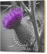 Scotland Calls 2 Wood Print