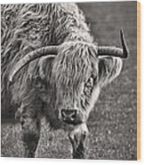 Scottish Highland Cow Wood Print