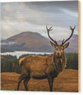 Scottish Stag Wood Print