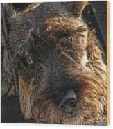 Scottish Terrier Closeup Wood Print