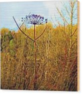 Scottish Thistle On The Firth Wood Print