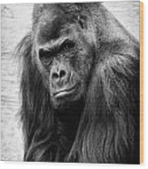 Scowling Gorilla Wood Print