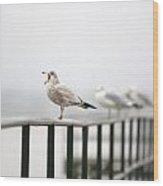 Screaming Seagull Wood Print