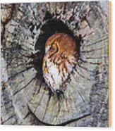 Screech Owl 02 Wood Print