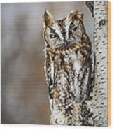 Screech Owl Checking You Out Wood Print