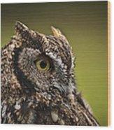 Screech Owl 1 Wood Print