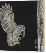 Screech Owl Feeding Owlets Wood Print