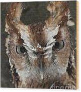 Screech Owl Portrait Wood Print