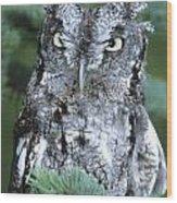 Screech Owl Straight On Wood Print