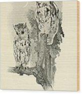 Screech Owls Wood Print