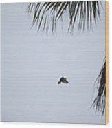 Scrub Jay In-flight Wood Print